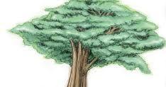 Psikotes Gambar Pohon Psychologymania Contoh Soal Psikotes Matematika Gambar Jawaban Lengkap Tes Psikotes Adalah Salah Satu T Menggambar Pohon Pohon Gambar