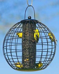 Globe Feeder Lets Small Birds Dine in Safety    The openings on this stylish feeder are just the right size for finches, nuthatches and other small birds, but keep out jays and other feeder bullies. The latching top stays firmly in place to help keep burglar squirrels out of your birdseed. Our Globe Cage Feeder is especially effective against gray squirrels.