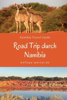 Erfahrungen meiner großartigen Namibia Rundreise als Selbstfahrer. #Tipps rund um #Urlaub in #Namibia. #Auszeit #Roadtrip #Genussreisetipps, die beste #Reisezeit, #Packliste #travel #Photography #Safari #Lodge
