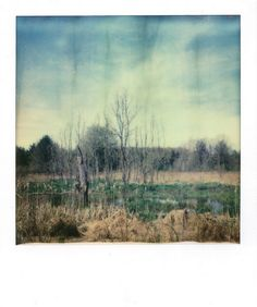 Spring at the marsh | Polaroid SX-70 | Impossible Project Film