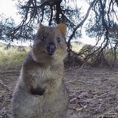 Cute Little Animals!  ...THE HAPPIEST GUY IN THE WORLD!  (& He Lives In Western AUSTRALIA )  ...Where Everything Is BIGGER, Can, & Will KILL YOU...