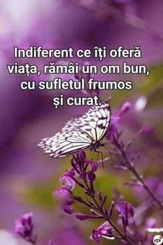 Indiferent ce îți oferă viața - Viral Pe Internet Words Of Encouragement, Kids And Parenting, Motto, Good To Know, Positive Quotes, Spirituality, Positivity, Faith, Inspirational Quotes