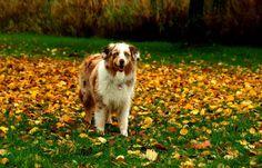 Wochenende, ach wie schön, ... lass uns raus zum Spielen gehen, für`n Hund ist jedes Wetter fein, ob Regen oder Sonnenschein.  :-) Nicht nur in Losheim am See.