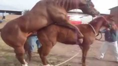 New Special Animal mating - Horse mating videos new HD 2015 Part 4