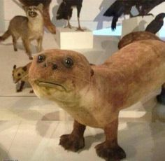 19 Reasons Why @CrapTaxidermy Is The Most Horrifying Account On Twitter