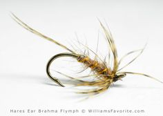 Hares Ear Brahma Flymph - by William Anderson - WilliamsFavorite.com - hare\'s ear dubbing blend in a drop loop. Flymph, Emerger, Soft-Hackle, Soft hackle, fly pattern, nymph, fly fishing, fly tying. Jim Leisenring.