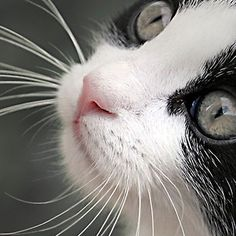 ¿Sabías que los bigotes de los gatos les ayudan a mantener el equilibrio y a ubicarse en la oscuridad? #CuriosidadesCVP  #ServiciosCVP #Mascotas #CVP #PetLovers #Pets #Perros #Gatos #Dogs #Cats #Mascotagram #Petstagram #PetShop #DogLovers #CatLovers #NoAlMaltratoAnimal #LovePets #Instapet #ILoveMyPet #DogLife #Veterinaria