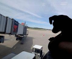 just checkin out the scene : @youcancallmecharlee - - #puppylove #doglover #dogoftheday #instapet #doggy #doglovers  #dogsofig #doglife #dogsofig #doglife #doggie #doglove #happydog #hund #perro #dogscorner #dogsofinstaword #chien  #doge #dogloverstagram