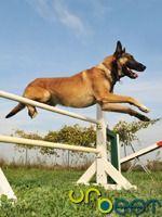 Problemas com o seu cão?  Não fique fora da lei e veja qual o treinador de cães mais perto de si.  http://www.na-casa.pt/index.php/cascais-oeiras/animais-de-estimacao/treinadores.html