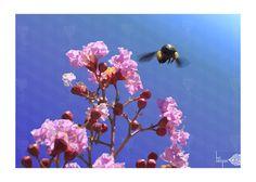 Bumblebee - www.facebook.com/ihcdesigns