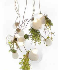 Pendant Lights with Glass Plant Terrariums from Bocci, Modern Home Decor
