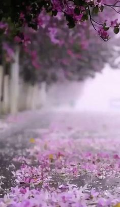 Beautiful Nature Scenes, Beautiful Photos Of Nature, Beautiful Nature Wallpaper, Beautiful Gif, Amazing Nature, Beautiful Landscapes, Beautiful World, Flower Background Wallpaper, Scenery Wallpaper