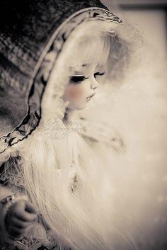 Fern | Flickr - Photo Sharing!