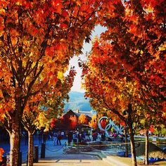 Beautiful #fall colours in #Whistler Village.  Every week visitors hashtag and share their Whistler images. Check out this month's top three and the stories we've uncovered on each.