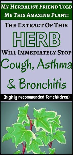 English Ivy – Natural Remedy For Cough, Bronchitis & Asthma