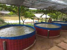 #1 How to Start Tilapia Farming   BEST Selling #1 Fish Farm Tank