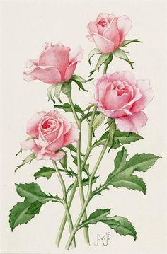 Botanical Flowers, Botanical Prints, Art Floral, Flower Prints, Flower Art, Watercolor Flowers, Watercolor Paintings, Images Lindas, Vintage Rosen