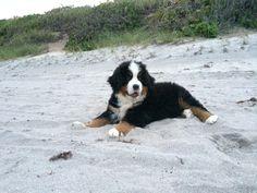 Maverick at the beach!