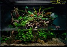I have finally found a hobby that can incorporate my love for fishtanks and my mrs.' love for gardening...Paludariums! A paludarium is a typ...