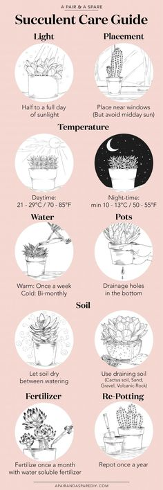 An Illustrated Guide to Caring for Your Succulents | A Pair & A Spare