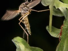 New street lamps our mosquitoes with fake human scents
