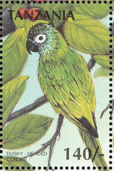 Dusky-headed Parakeet stamps - mainly images - gallery format