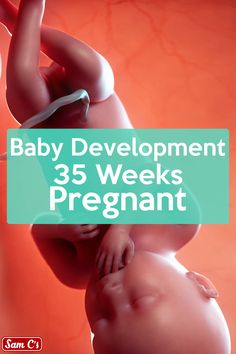 What does my baby look like at 35 weeks pregnant? - Are you as anxious as ever to finally meet your little one? Well, at 35 weeks pregnant, you don't - Pregnancy Health, Pregnancy Humor, Pregnancy Workout, Pregnancy Tips, 35 Weeks Pregnant, Pregnant Diet, Getting Pregnant, Video Pregnant, Baby In Womb