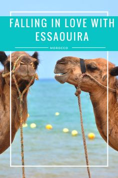 I am sure you have heard about Marrakech, Morocco but what about Essaouira? This gem located off of the Atlantic Coast in North Africa was the perfect escape from the crowded red city. Read about where I ate, stayed, and played in Essaouira on the blog now at thirty30courtney.com