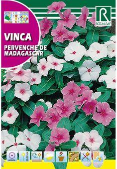 Egynyári virágok : Rózsameténg Movie Posters, Art, Periwinkle, Art Background, Film Poster, Kunst, Performing Arts, Billboard, Film Posters