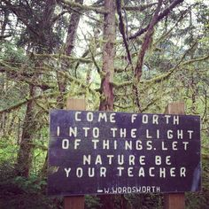 Come forth into the light of things. Let Nature be your teacher. ~ Wordworth