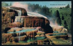 YELLOWSTONE NATIONAL PARK Cleopatra Terrace Mammoth Hot Springs VINTAGE POSTCARD