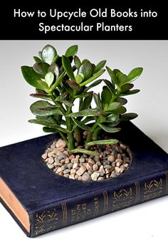 How to Upcycle Old Books into Spectacular Planters #upcycle #planters