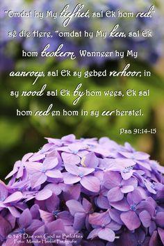"""Dag 8 Bybelvers: Psalm 91:14-15 """"Omdat hy My liefhet, sal Ek hom red,"""" sê die Here, """"omdat hy My ken, sal Ek hom beskerm. Wanneer hy My aanroep, sal Ek sy gebed verhoor; in sy nood sal Ek by hom wees, Ek sal hom red en hom in sy eer herstel. Afrikaanse Quotes, Psalm 91, Special Words, Scripture Verses, Trust God, Inspirational Quotes, Sunday School, Blessings, Christian"""