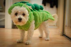 Peas please! Dog Halloween Costumes, Dog Costumes, Halloween Treats, Funny Dog Images, Funny Dogs, Dog Recipes, Mom Humor, Dog Treats, Dog Mom
