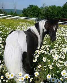 pony in the flowers