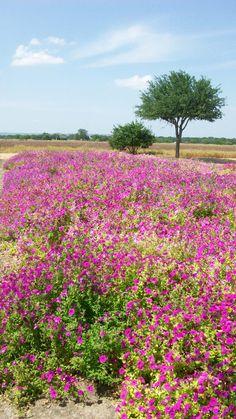 Wild Seed Farm, Fredericksburg, Texas