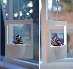 Polaroid Photo Planter - Jung Hwajin: A lovely hanging planter made reminiscent of a polaroid photo.