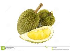 durian-ripe-part-isolated-spikes-white-background-41339843.jpg (1300×957)