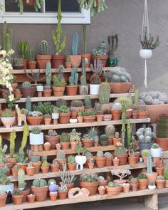 is already a thing apparently so we'll make a small contribution to it. Succulent Gardening, Cacti And Succulents, Planting Succulents, Cactus Plants, Cactus Art, Deco Cactus, Cactus Flower, Flower Pots, Flower Shop Design