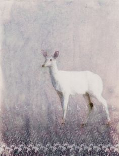 albino deer by hadley hutton