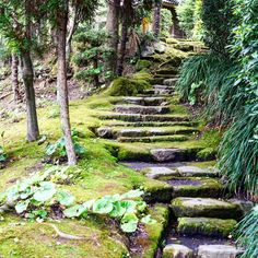 #senganen #kagoshima #kyushu #kyushuisland #japan #japon #igspain #igs #travel #traveling #summer #holiday #stairs #green