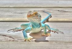 Colorful Lizards | prevent your lizard from become overweight or inactive, further