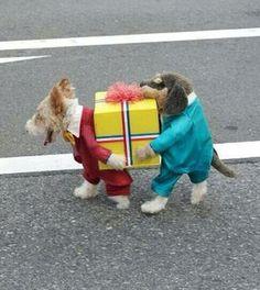 It's one dog! Haha, Dogs, Cute, Sports, Hs Sports, Ha Ha, Pet Dogs, Kawaii, Doggies