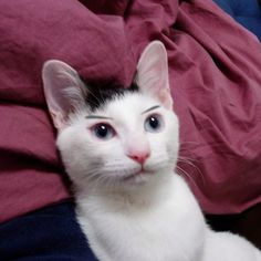 Why don't all cats have eyebrows such as these? #loveit