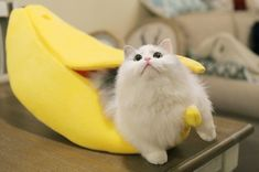 Fluffy Animals, Animals And Pets, Baby Animals, Cat Paws, Dog Cat, Kittens Cutest, Cats And Kittens, Cute Cats Photos, Kawaii Cat