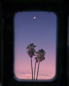 arynlei, creative (@arynlei) • Instagram photos and videos Northern Lights, Palm, Leaves, Soft Light, Photo And Video, Nature, Instagram, Videos, Creative