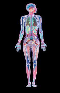 """Obraz naukowy, uzyskany przez szczegółowy przegląd ciała i cyfrową kombinację różnych uzyskanych płaszczyzn. """"Skaner"""" daje użytkownikowi pewność dzięki pełnemu obrazowi ciała i jego podobieństwu do prawdziwej fotografii. #ciało #historia #człowiek #antropologia"""