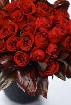 227 best red roses quotes images love red roses beautiful flowers rh pinterest com