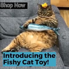 Plush Creative Fish Shape Cat Toy Pet Gifts Catnip Stuffed Pillow Made of cotton and short plush, it's soft and will not do harm to cats' paws. The simulation fish toy looks like real fish, it will make a lot of fun between you and your cat. Funny Animal Memes, Funny Animal Videos, Cute Funny Animals, Funny Animal Pictures, Cute Baby Animals, Cute Cats, Funny Cats, Grumpy Cats, Cat Paws