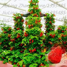 Promotion!!! 1000 pcs Climbing strawberry seeds + rose seeds for gifts, Bonsai, flower potted plants, DIY Home and Garden.